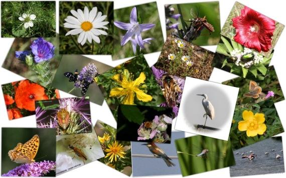Esempi di Biodiversità animale e vegetale
