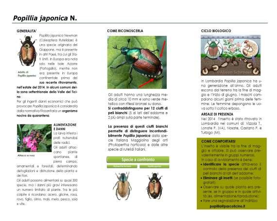 volantino_popillia_japonica(1)_Page_2